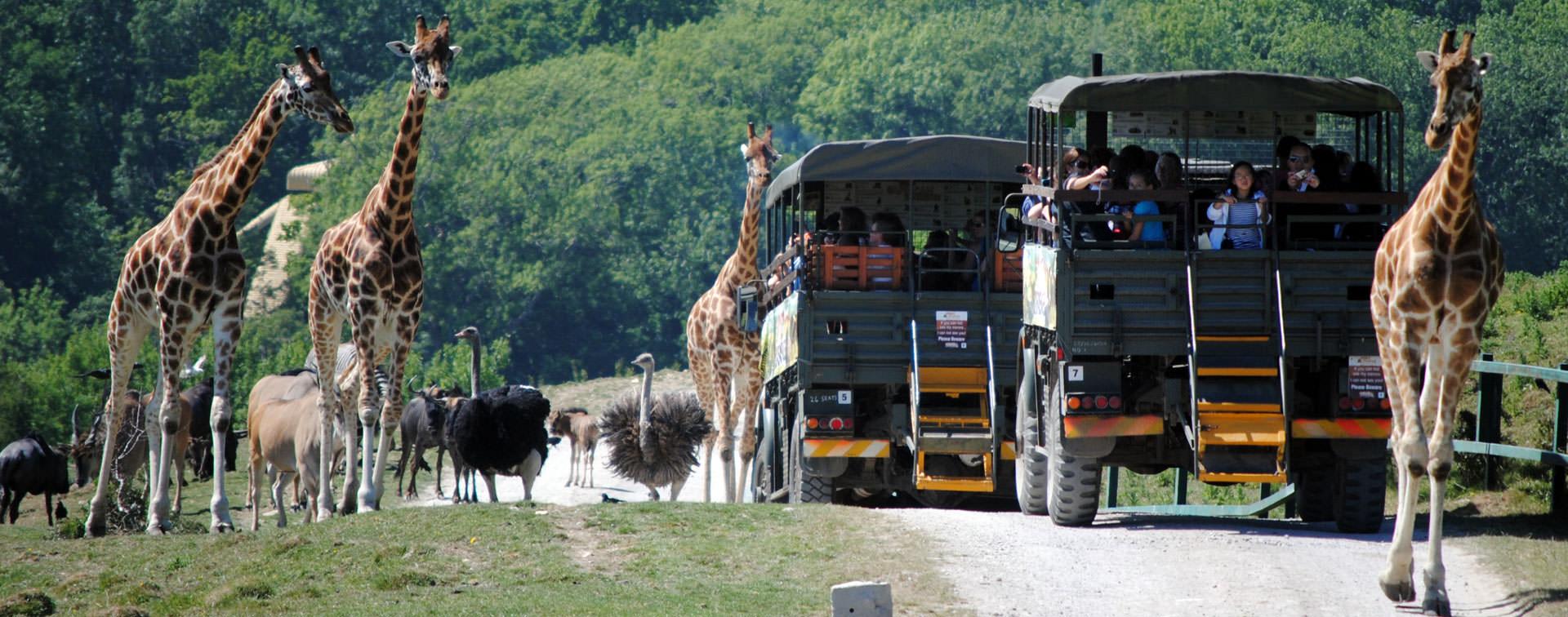 Safari na Inglaterra – Port Lympne