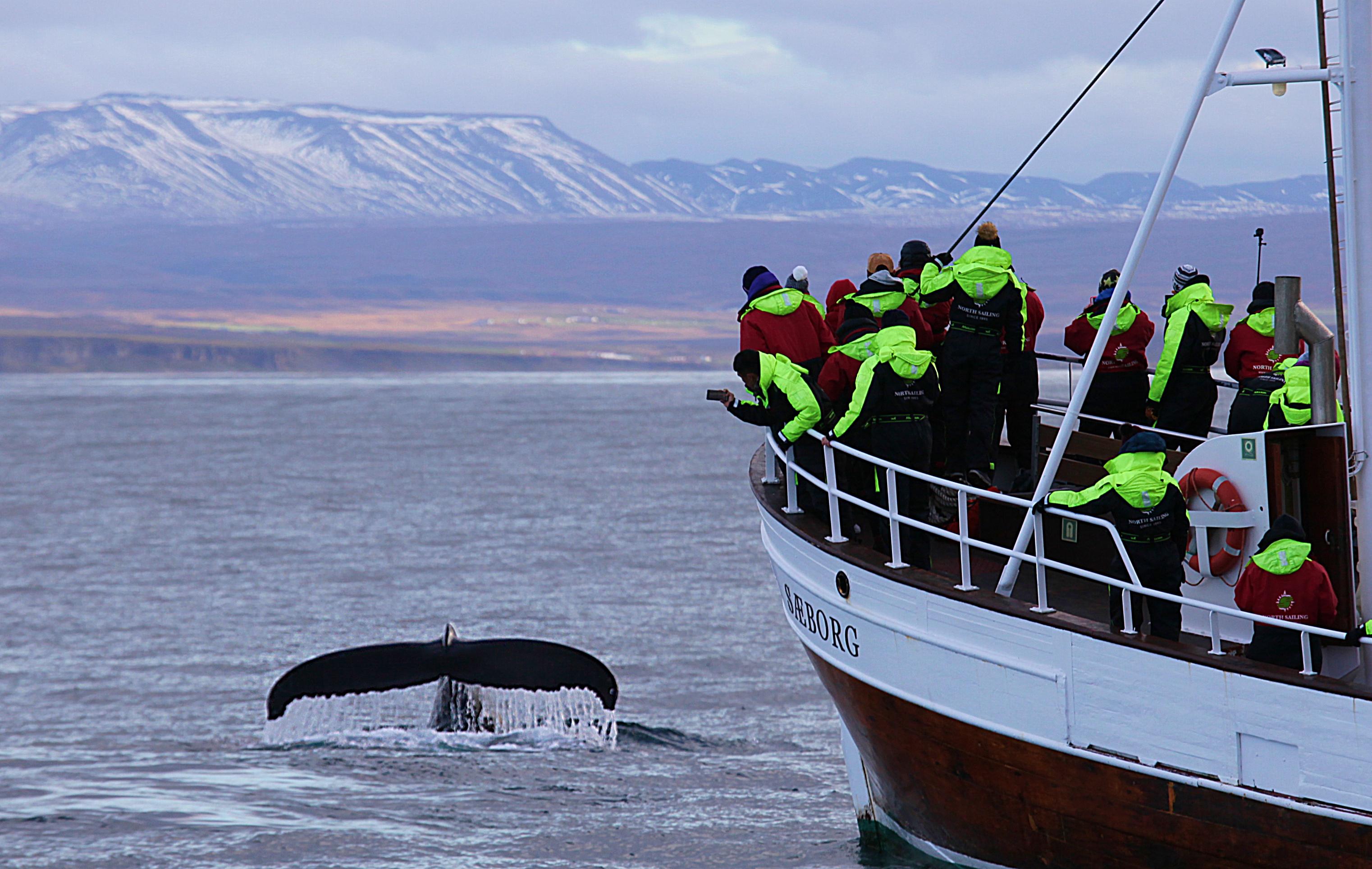 Husavik – O melhor lugar para observação de baleias na Islândia